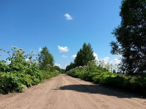 1 Га, лпх, Дмитровское направление, 130 км от МКАД - Фото 3