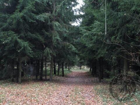 Участок 4 или 8 соток, у леса, на берегу реки г. Климовск, СНТ Дубрава - Фото 5