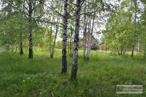 Участок 15 соток в д.Козино Волоколамского района - Фото 4