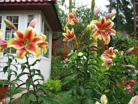 Продаётся дом с земельным участком в посёлке Орехово - Фото 4
