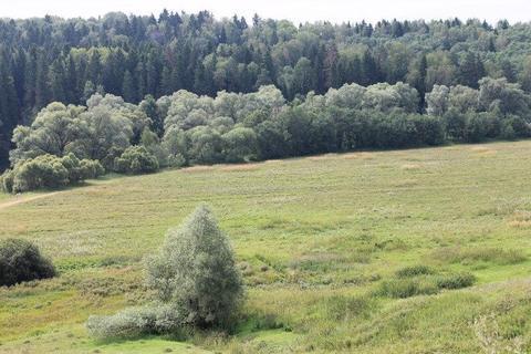 Земельный участок в д. Клово - Фото 5