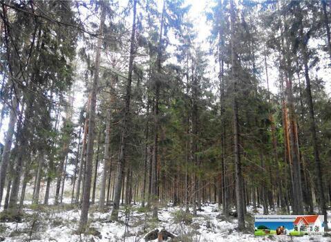 Новинка рынка недвижимости, дача в вековом лесу, 2 Гектара. - Фото 1