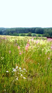 Продается земля ИЖС 20 соток, не коттеджный поселок, красивое место - Фото 3