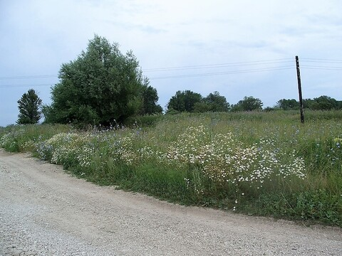 Участок 12 соток в деревне Юрятино от собственника - Фото 5