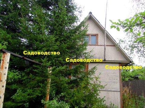 Дача вокруг леса с прудом для купания р-н Красная Пресня - Фото 1
