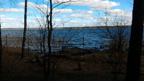 Участок с вековыми соснами, на 1 береговой линии озера Селигер. - Фото 2