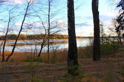 Участок 880 соток на первой линии Истринского водохранилища в лесу - Фото 5