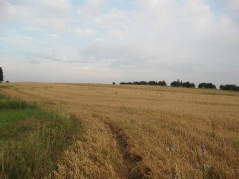Продажа земельного участка 5,5 га сельхоз вблизи каскада озер - Фото 3
