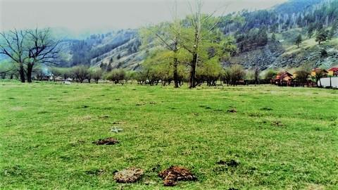 Продажа участка, Элекмонар, Чемальский район - Фото 3