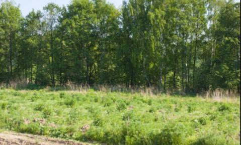 Продам участок 6,4сот (ИЖС) тиз солнечный остров - Фото 2