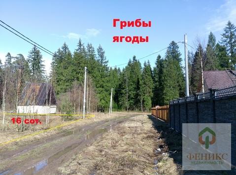 Сиверский - Фото 5