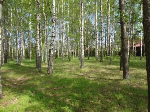 Эксклюзивный участок на реке Волга - Фото 3