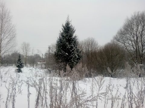 Продается земельный участок в с. Толбухино - Фото 3