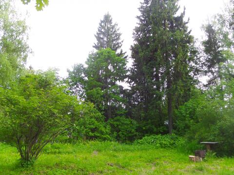 Лесной участок под ИЖС - Фото 5