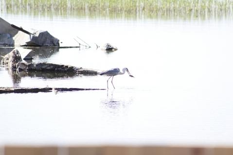 Участок ИЖС Ленинский с выходом на озеро - Фото 2