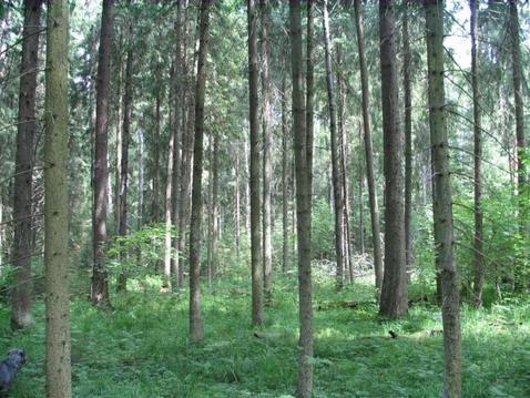 Лесной участок в д. Тимонино. - Фото 1