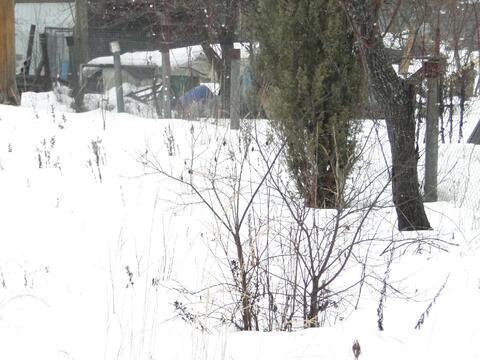 Участок 6 сот. , Киевское ш, 50 км. от МКАД. - Фото 3