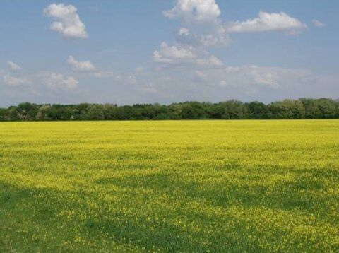 Продам: земельный участок 12 соток, Волоколамск