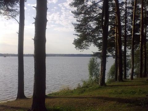 Участок на 1 береговой линии р. Волга, с вековыми соснами г.Конаково. - Фото 2