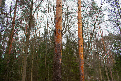 Квартира в лесу - Фото 4