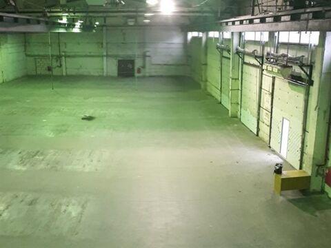 Сдам производственное помещение 2380 кв.м, м. Комендантский проспект - Фото 3