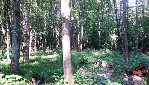 Участок 15 соток, с лесными деревьями в п. Ватутинки. Новая Москва. - Фото 2