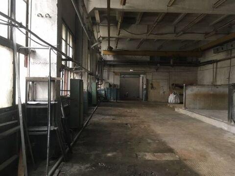 Сдам производственное помещение 527 кв.м, м. Черная речка - Фото 1