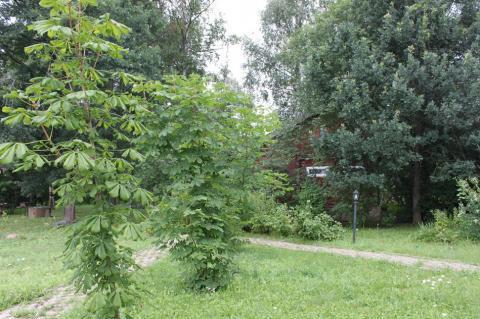Лесной участок 30 соток в поселке премиум-класса Новой Москвы - Фото 4