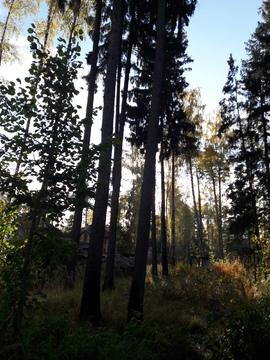 Лесной участок 10 соток - Фото 3