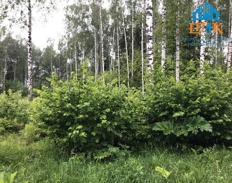 Дмитровский район, Рабочий поселок Деденево