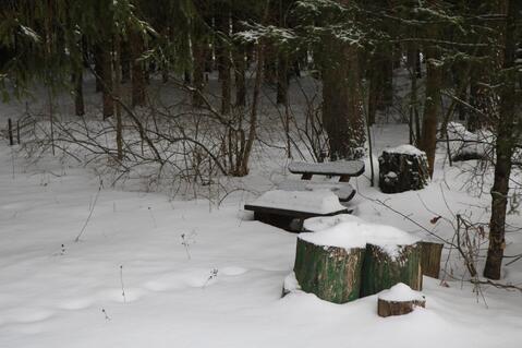Лесные Дали СНТ - Фото 3