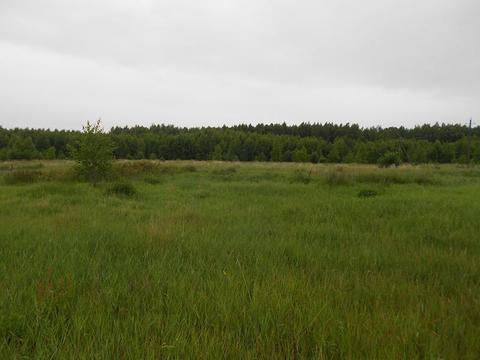 Участок в лесной д.Владычино у реки Пра, Клепиковского района. - Фото 2