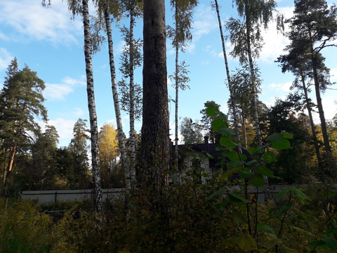 Лесной участок 10 соток - Фото 4