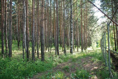 Лесной участок - 10 соток в Нижнеисетском районе - Фото 4