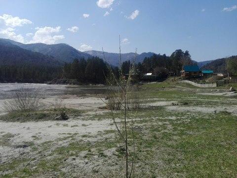 Продается участок на берегу Катуни - Фото 2