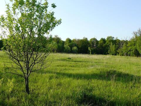 Ушаковка деревня участок 18,55 гектар Заокский район Тульская область - Фото 2