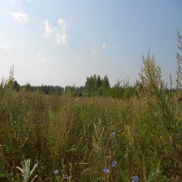 Участок 18 соток в д.Лаптево, Клепиковского района.