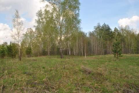 Продам: земельный участок 25 соток - Фото 4