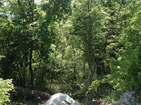 Участок в 100метрах от моря среди сосен ели и кипариса - Фото 3