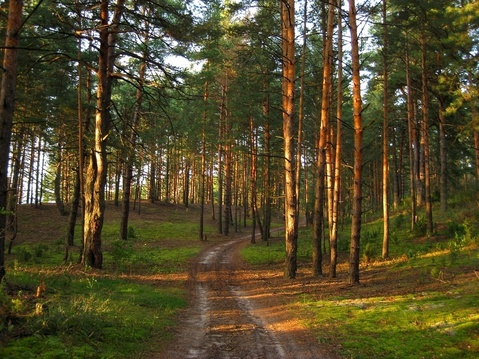 Вырица + 6 км , деревня Каушта - Фото 3