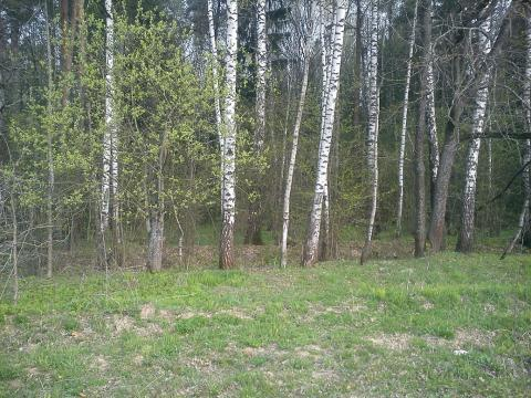 Участок д. Семенково - Фото 3