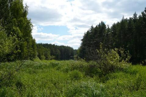 Участок на берегу реки Пра в д.Взвоз, Клепиковского района. - Фото 3