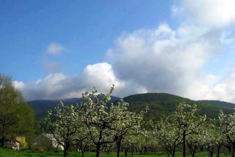 Земельный участок, г. Судак, с Земляничное 25 соток - Фото 2