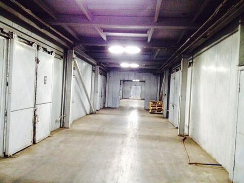 Сдается теплый склад 932м2 в п. Тельмана, Тосненский район - Фото 3