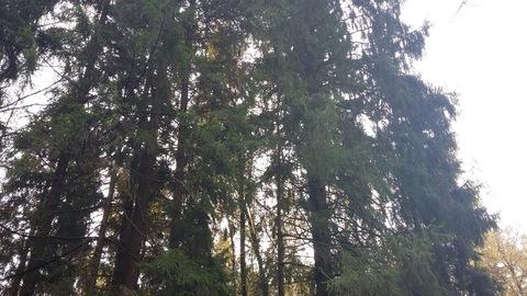 Продается земельный участок в микрорайоне Сходня, Московской области, - Фото 2