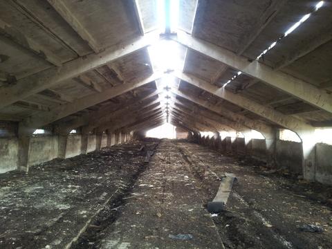 Продажа свинарника 880 м2 из ж/б на участке 2 га, примыкающего к «Дон» - Фото 1