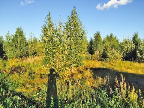 Земельный участок 22 сотки в кп Истомино. Лес, газ, электр-ство, вода. - Фото 1