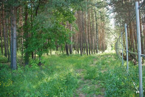 Лесной участок - 10 соток в Нижнеисетском районе - Фото 1