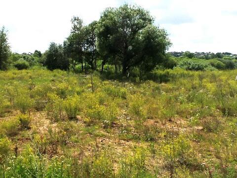 Земельный участок возле леса 9,5 соток д.Никульское (с.Остафьево) - Фото 1