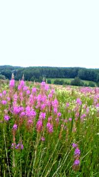 Земля ИЖС, красивые виды, дешево, 35 км от Н.Новгорода - Фото 1